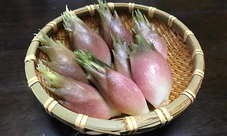 薬味だけじゃない!「みょうが」が沢山採れたので天ぷらにして食べる
