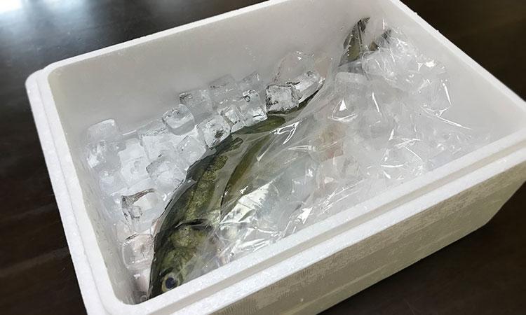 通販 鮮魚
